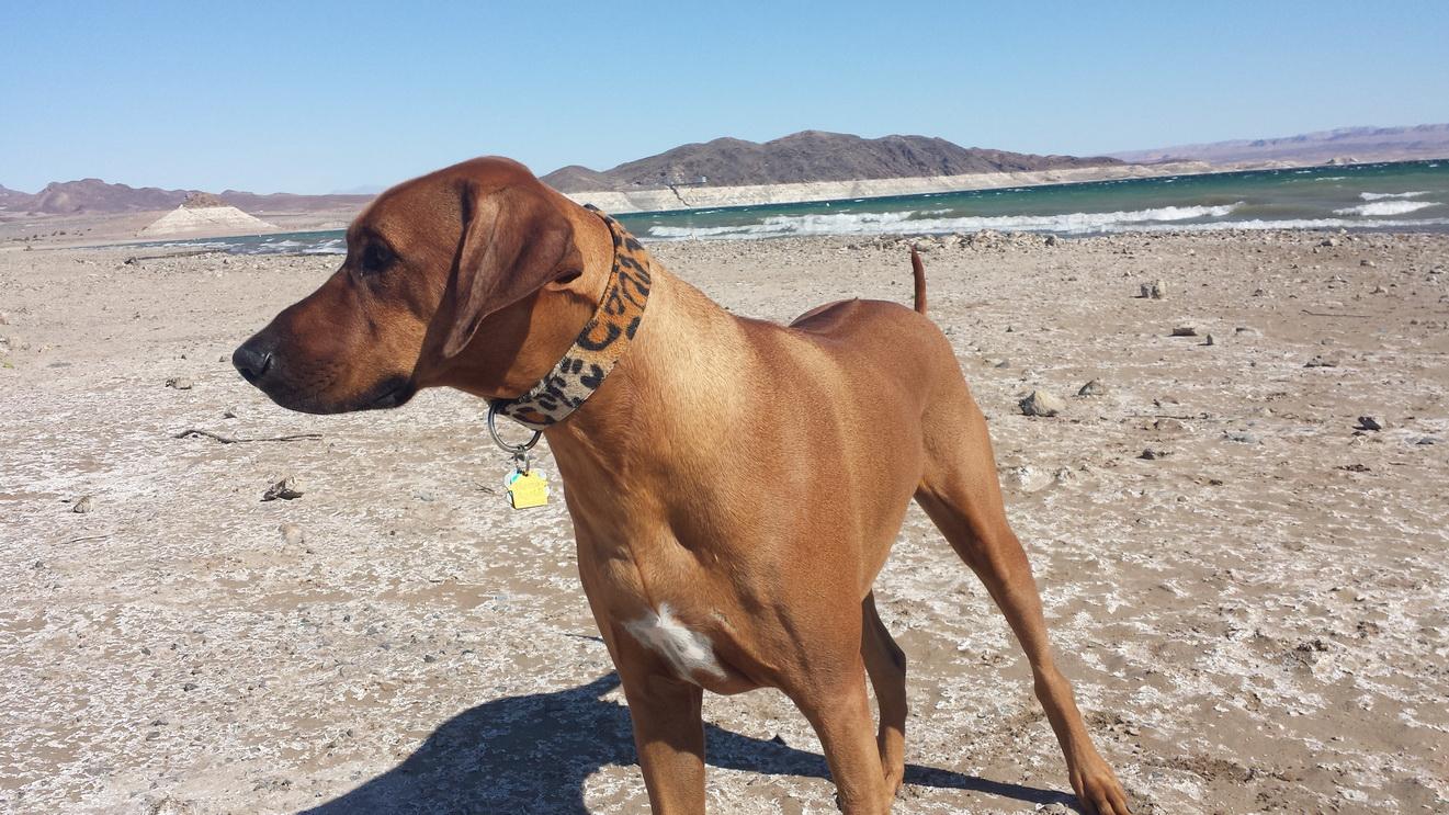 Julius im Vordergrund der berühmten Berge am Lake Mead