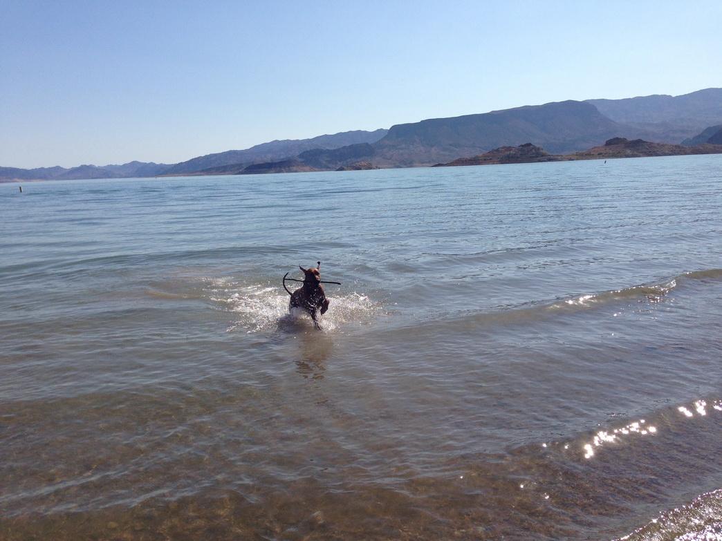 Lake Mead - Wasserreservoir und Erholungsgebiet