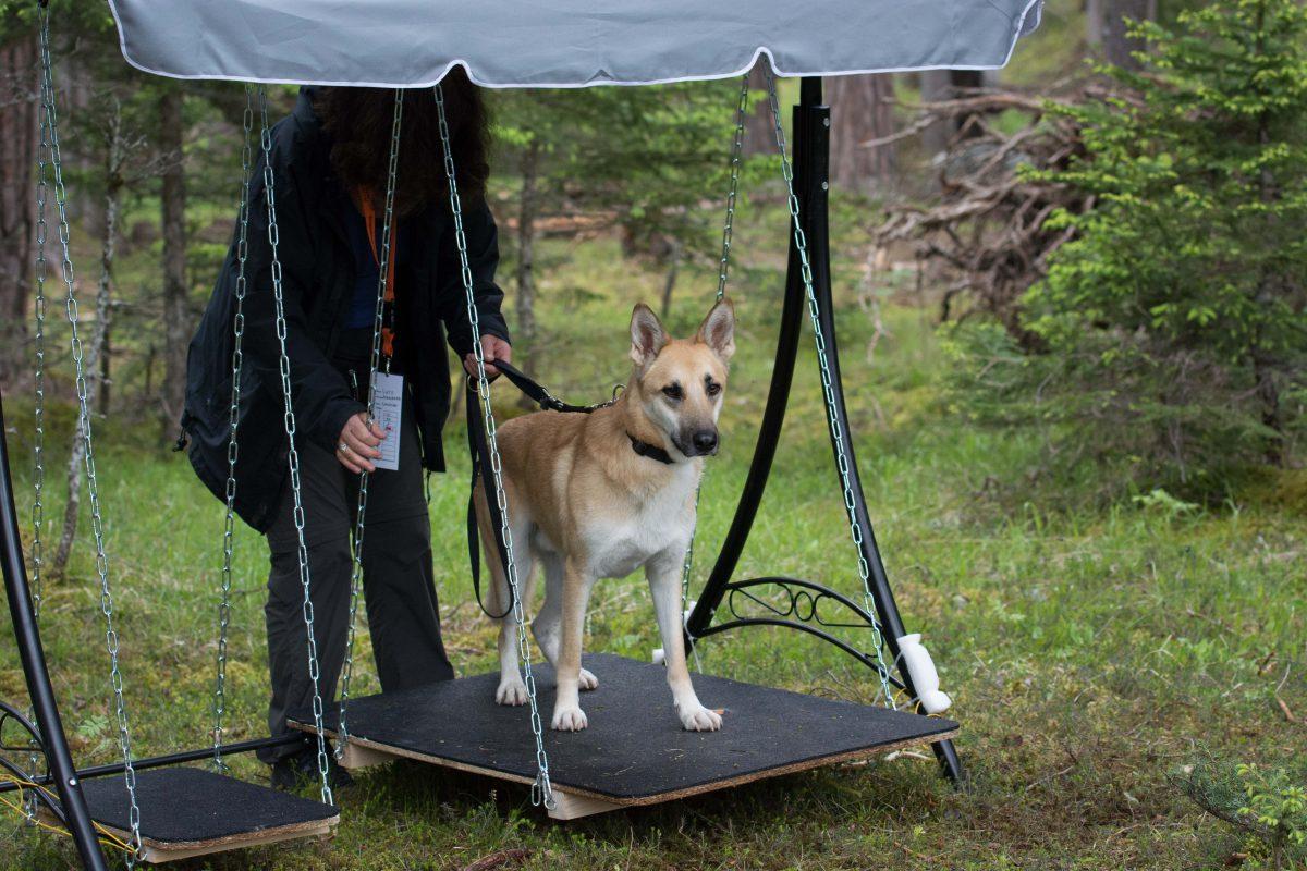 Hunde Military - knifflige Aufgaben Hund und Halter