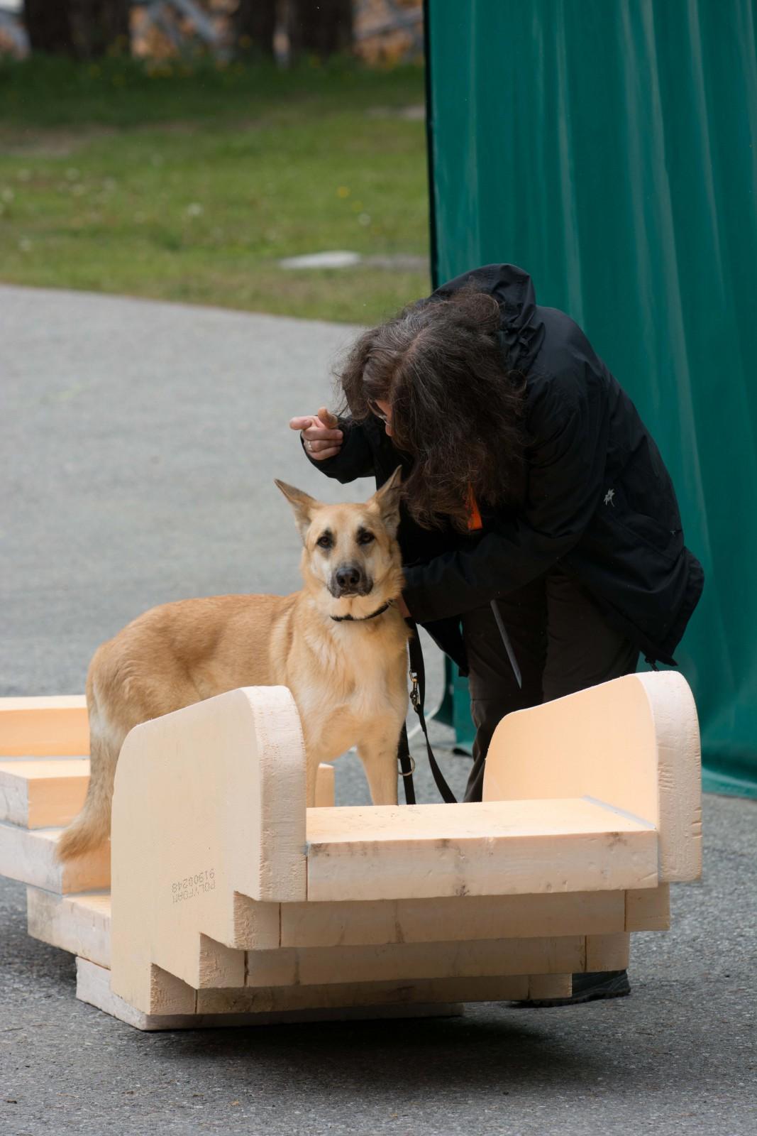 Hunde Military 3