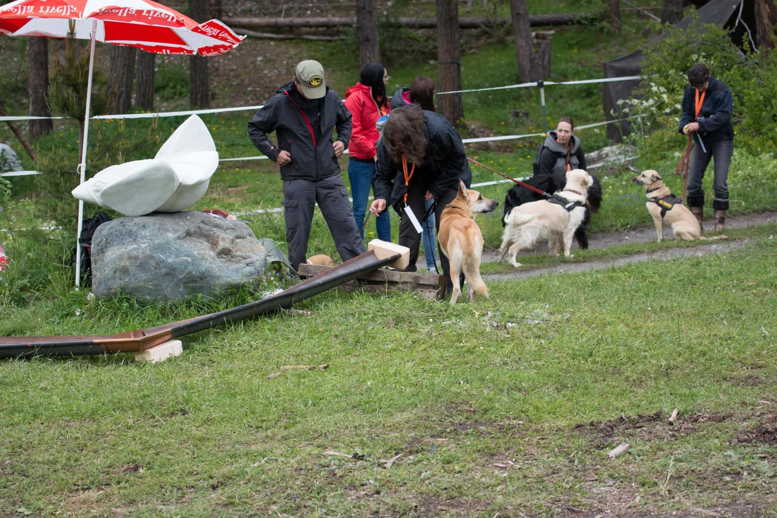 Hunde Military 4