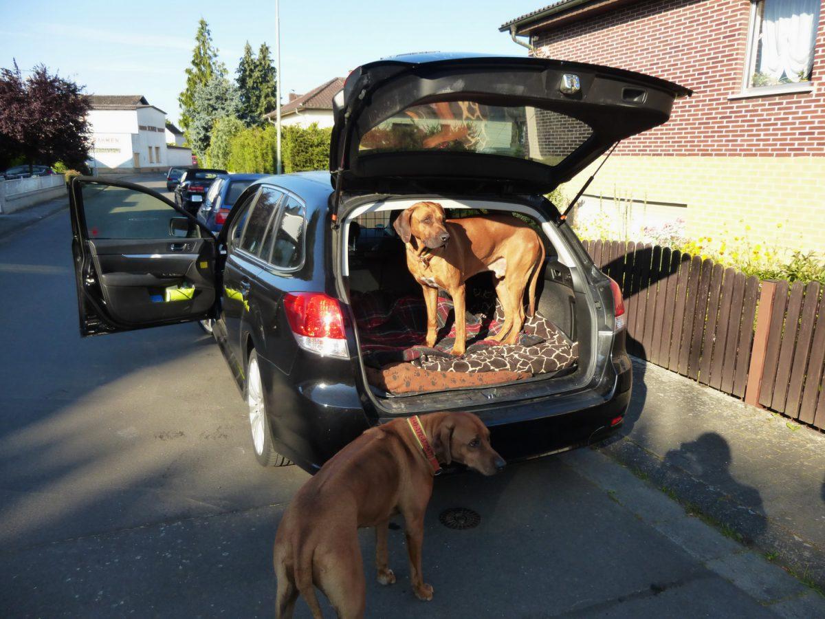 Packliste für einen Kurztrip mit Hunden nach Italien