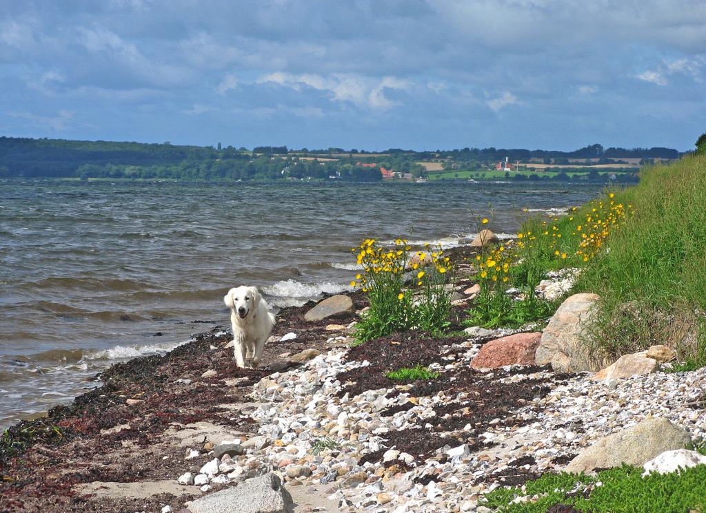 Reif für die Insel - mit dem Hund auf Fanö urlauben