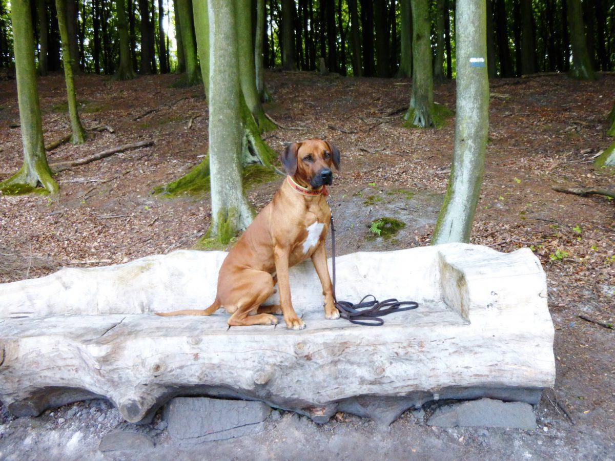 Mystische Orte und Sagen im kleinsten Nationalpark Deutschlands