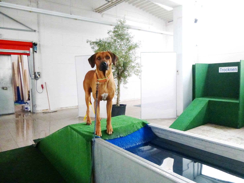 Oktober 2014 Besuch im AquaBello, dem Hundeschwimmbad in Hanau