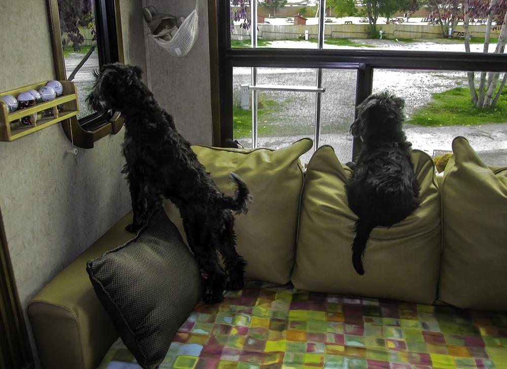 Debby und Faya auf Beobachtungsposten