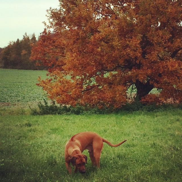 November 2014 Umzug - Goodbye Wetterau