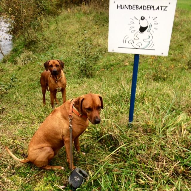 Badeplätze für Hunde (wenn auch nicht wirklich nutzbar für Otto-Normalhund) gibt's auch