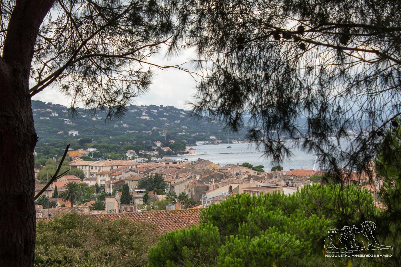 Pfeiffers - Blick auf St Tropez