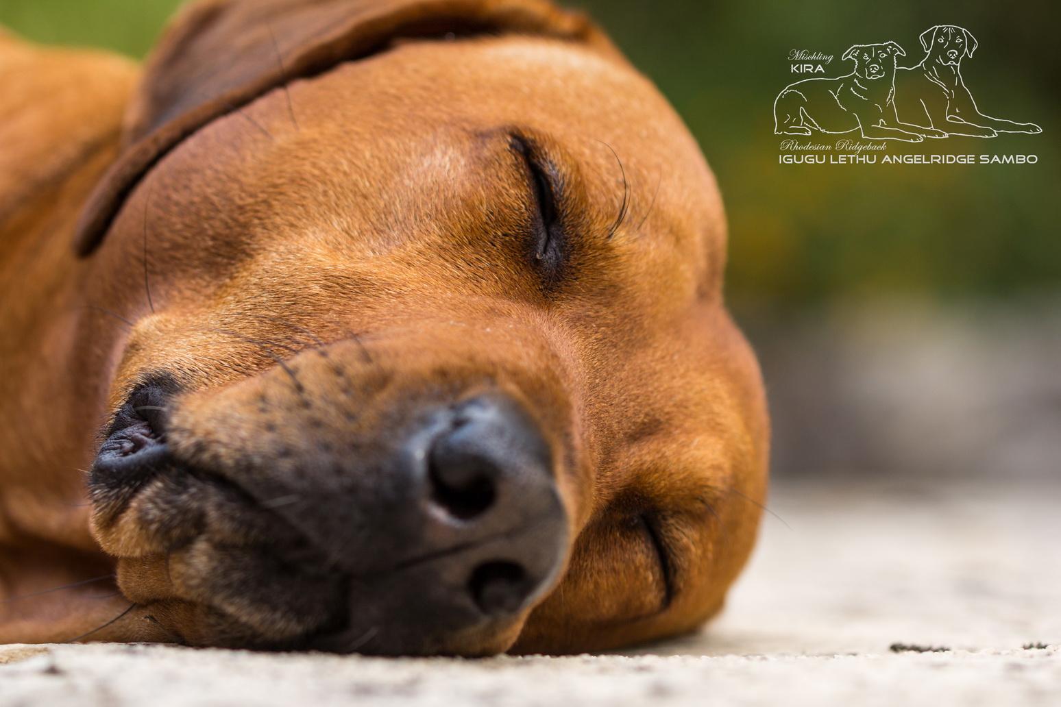 Ruhe und Entspannung - das gilt auch für Sambo