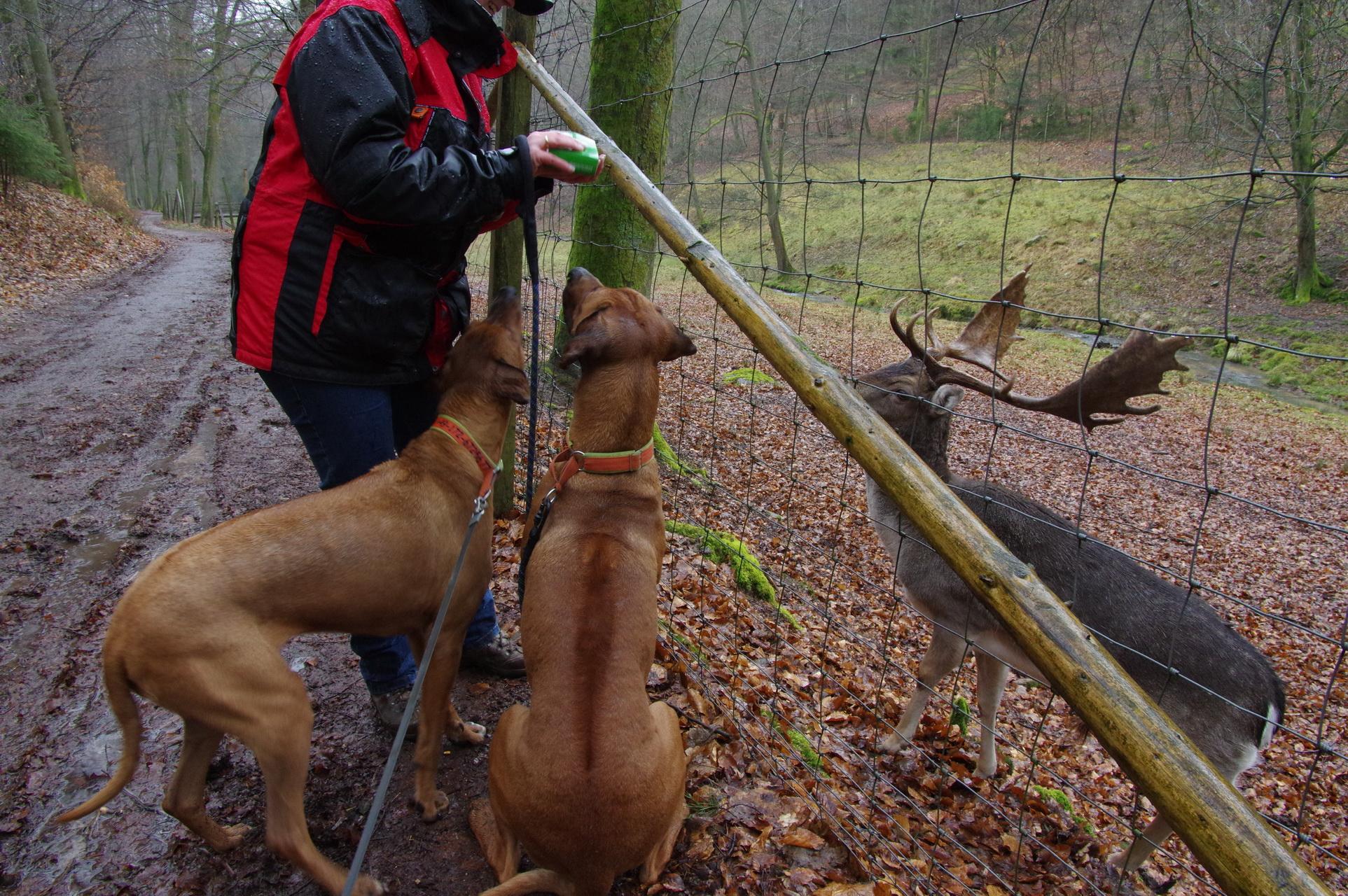 Februar 2014 Regenbild mt Suri und Dayo in einem Wildpark im Odenwald.