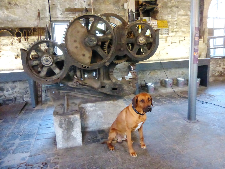 Auch in der historischen Werkstatt im Stöffel-Park sind Hunde willkommen