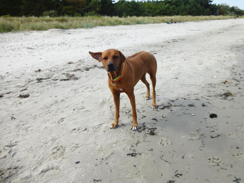 August 2014 Strandlust auf Rügen