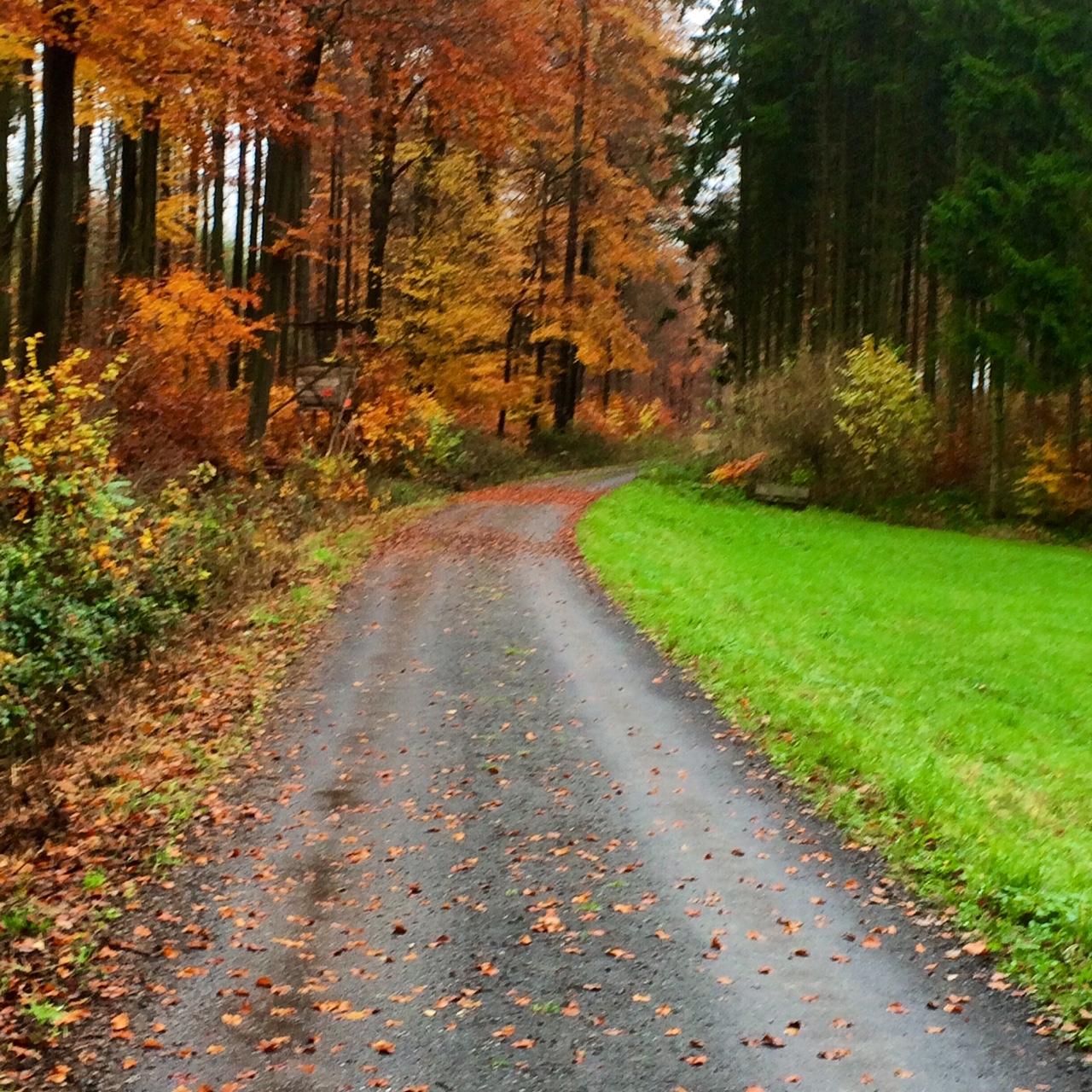 Indian Summer im November im südlichen Westerwald