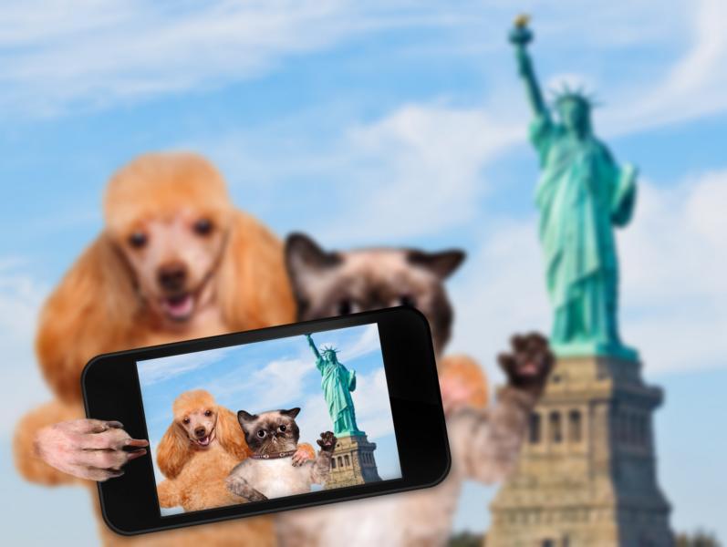 Hundefreundliche Reiseländer