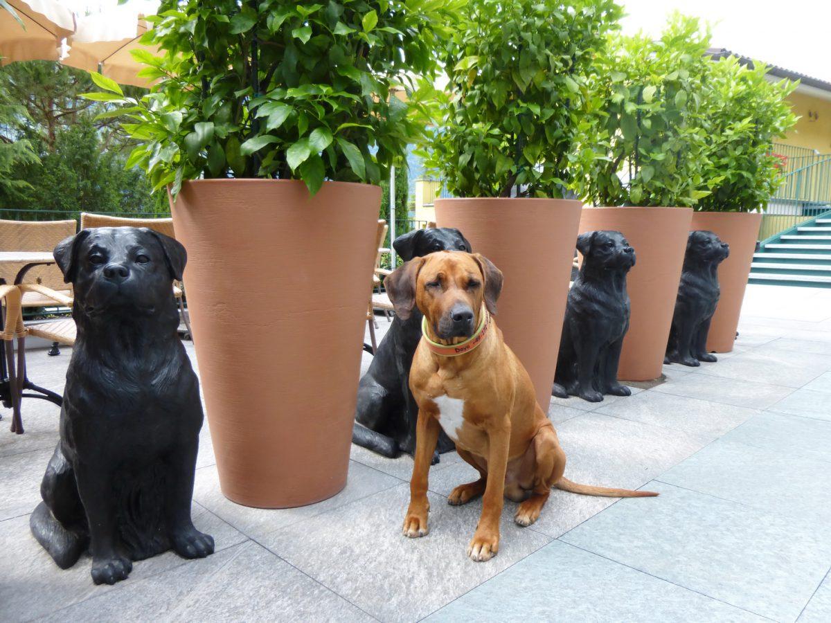 Hund im Hotel - 12 Tipps für ein gutes Miteinander