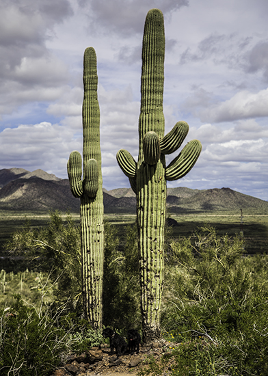 0322 1 13-Picacho-Peak-State-Park-Arizona-USA