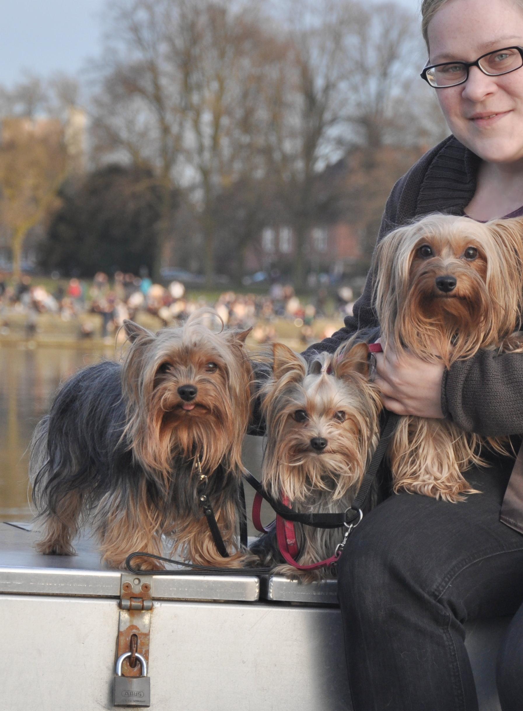 0412 Kellie Jaxson mit Kimi, Blanket und Amy - Der Yorkshire Terrier Blog