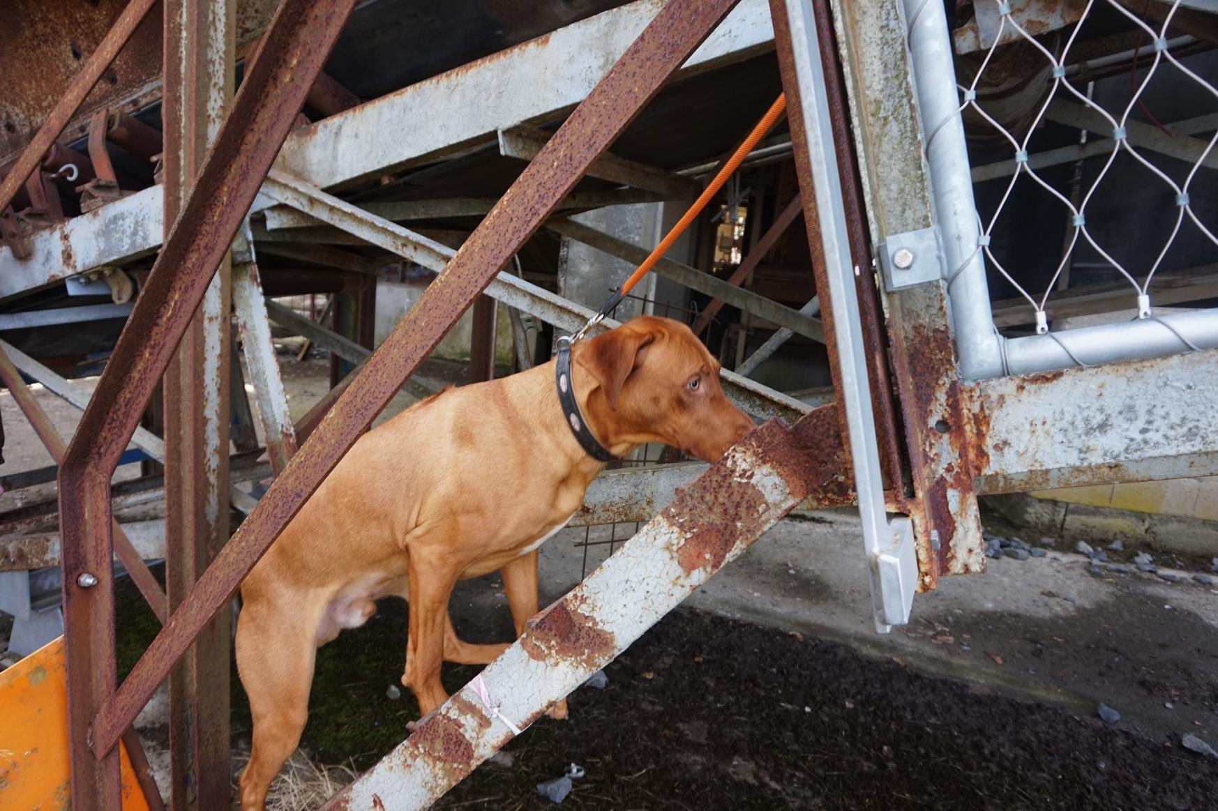 Angus tastet sich vorsichtig über die Stufen nach oben.
