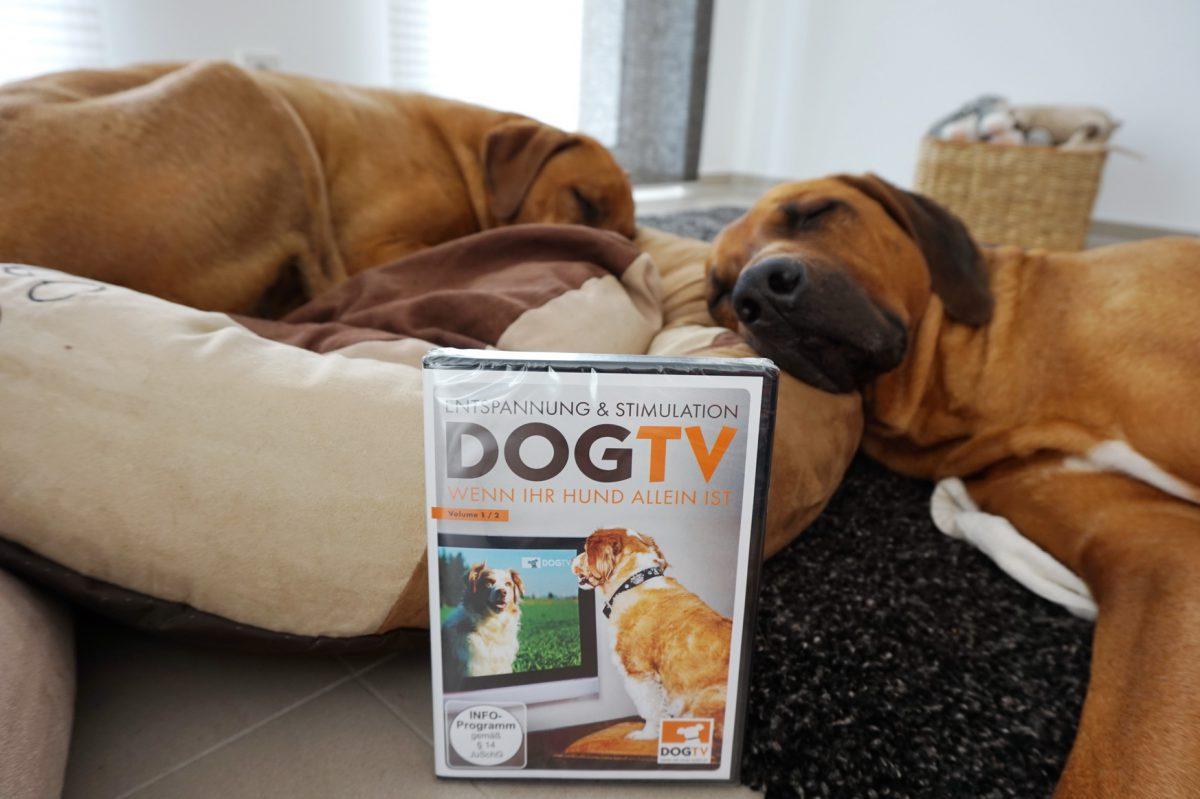 Hundefernsehen für Dayo und Suri