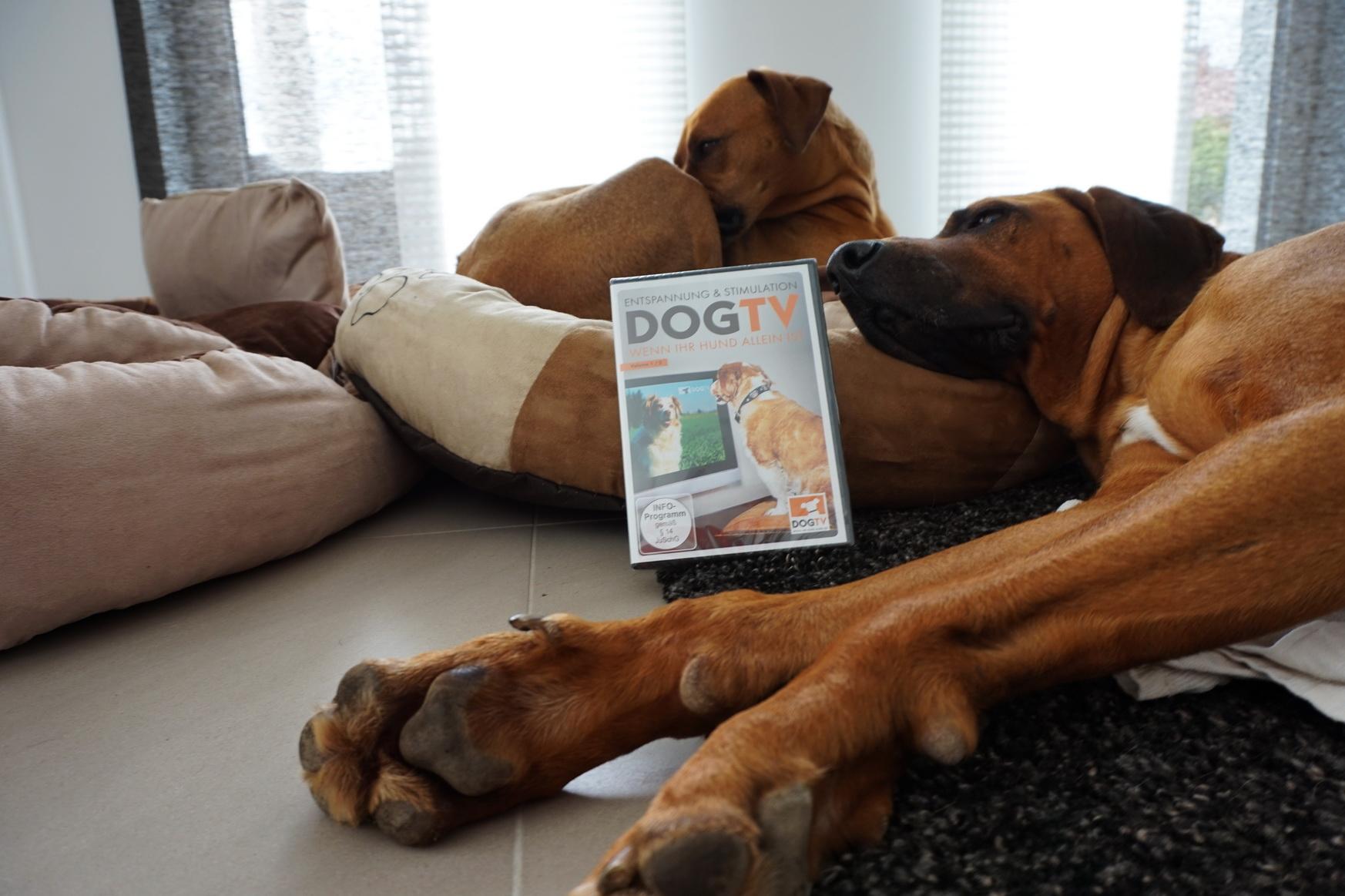 0609 DogTV 2
