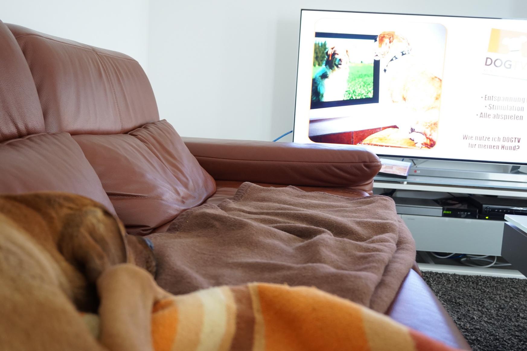 0609 DogTV 4