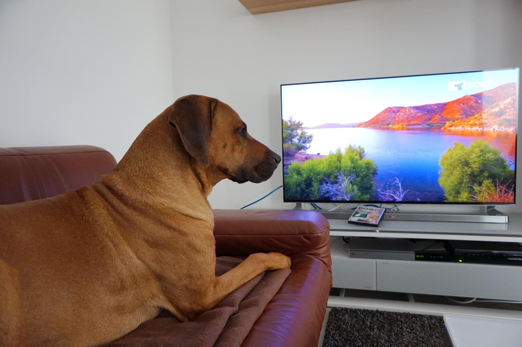0609 DogTV 5