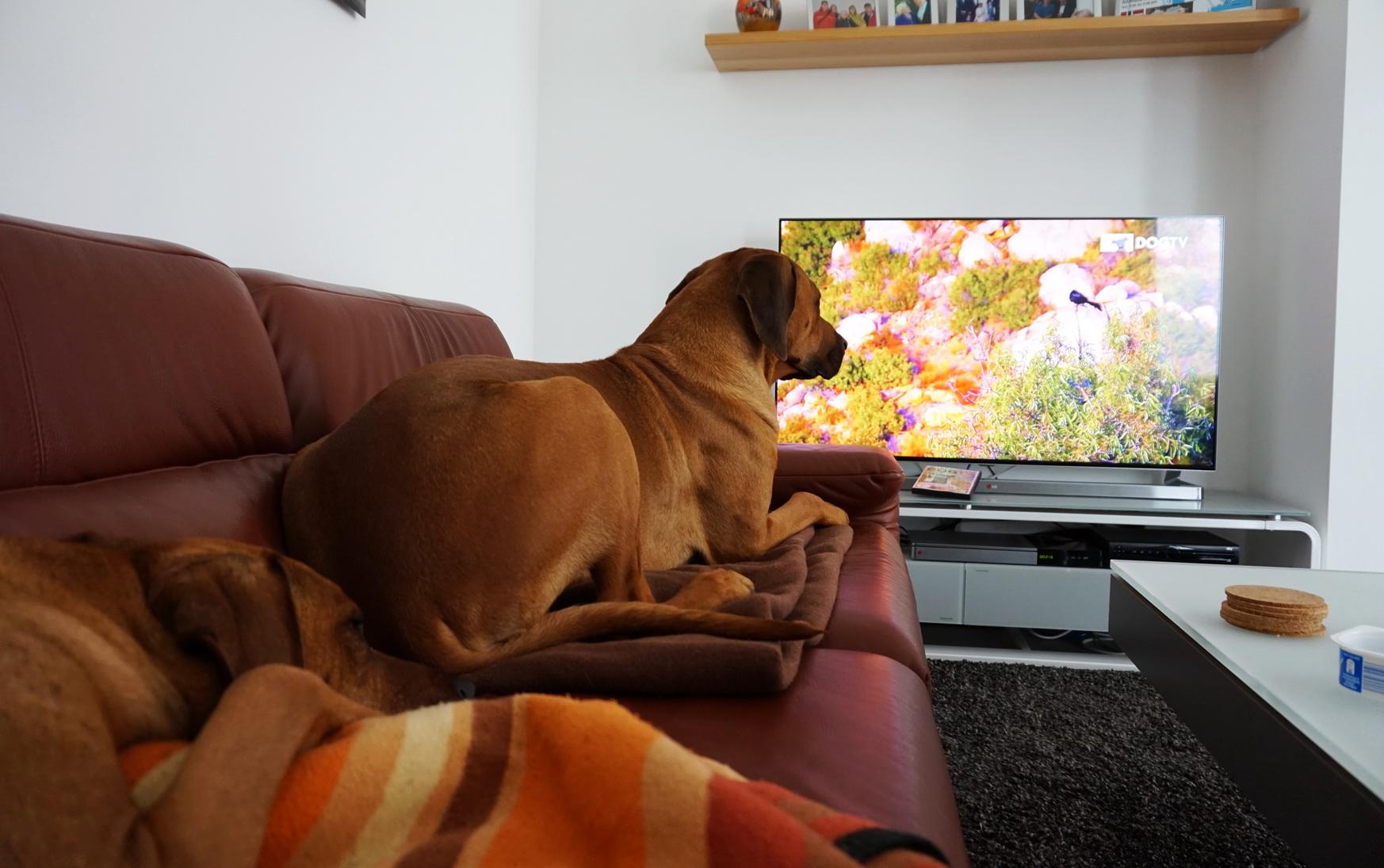 0609 DogTV 7
