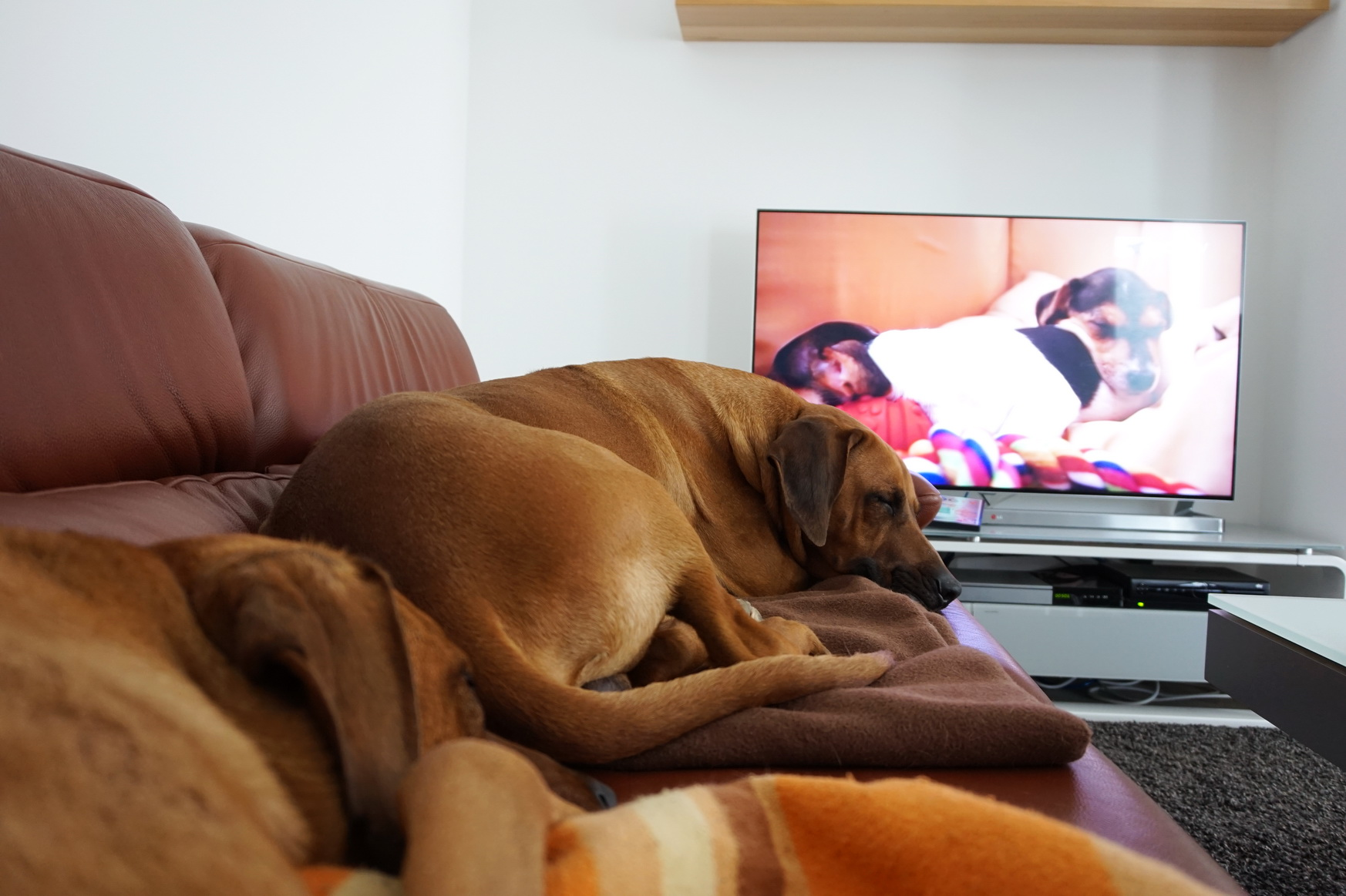 0609 DogTV 9