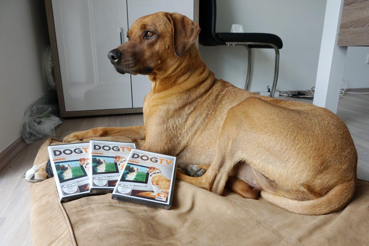 DogTV - die Gewinner stehen fest