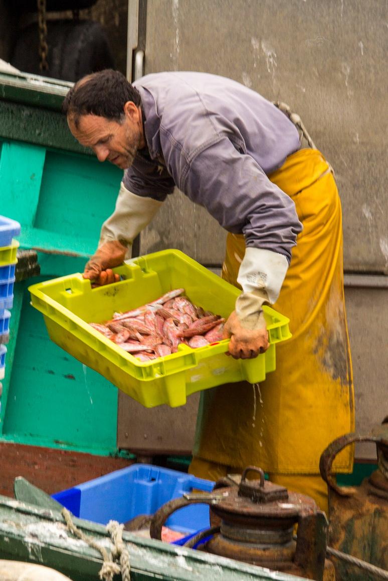 Fangfrischer Fisch im Hafen von Guilvinec in der Bretagne