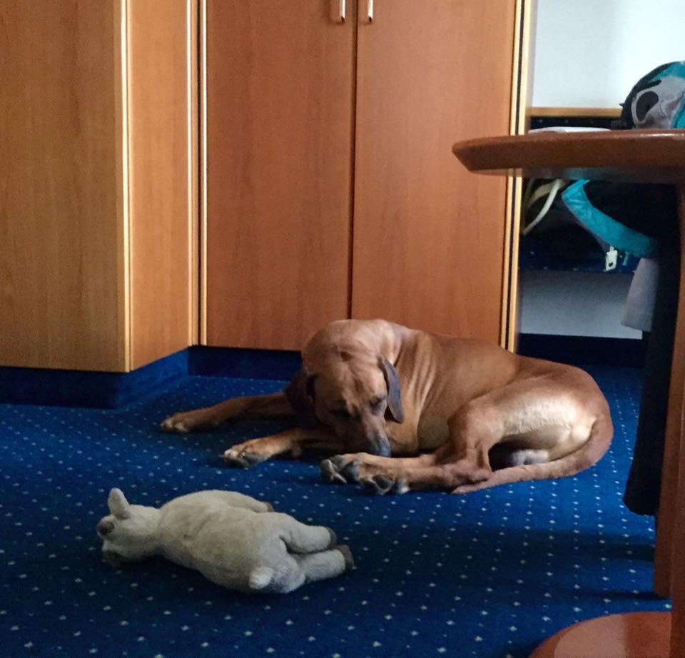 Hund im Superior-Doppelzimmer im Sunderland Hotel im Sauerland