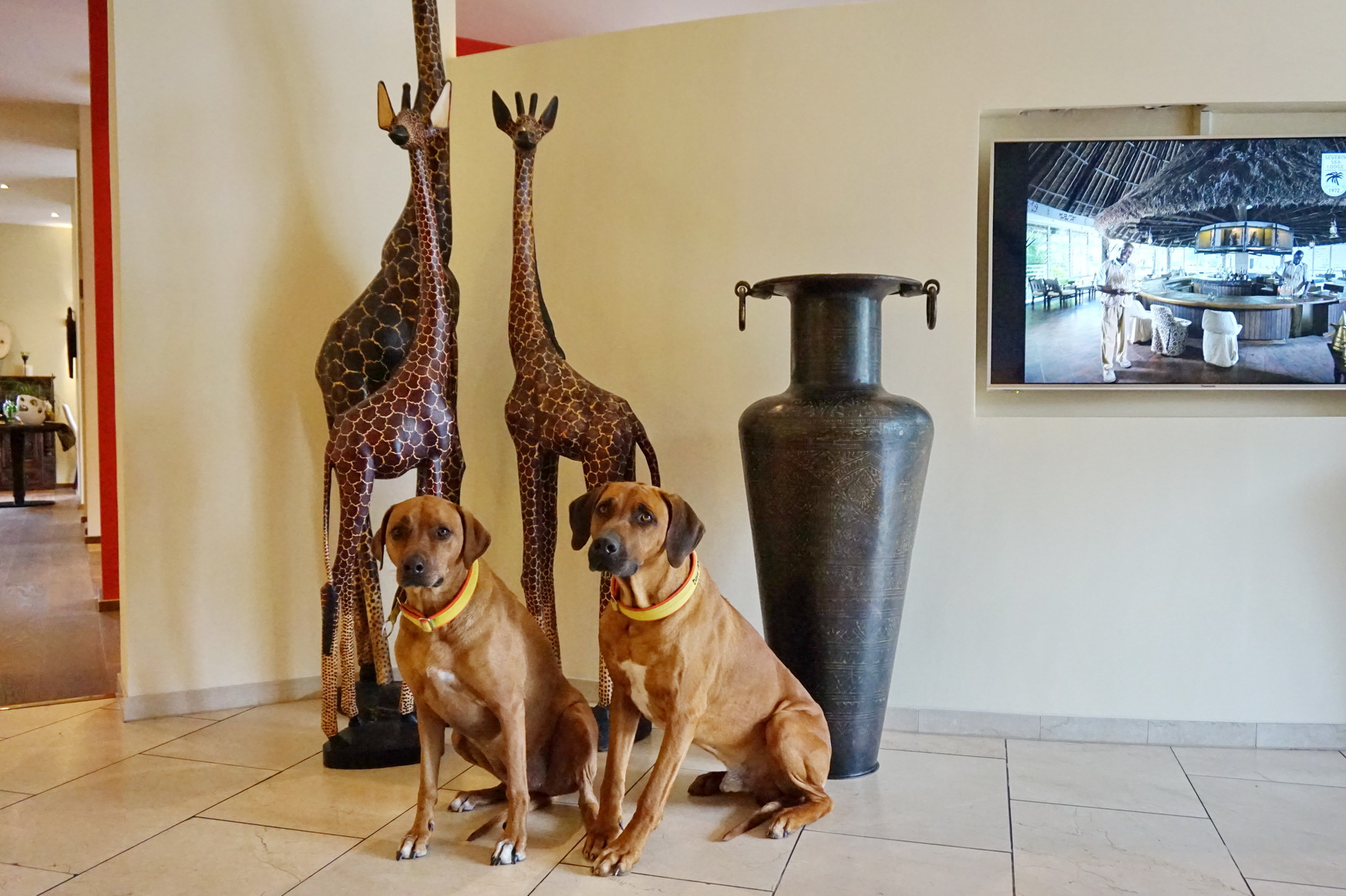 Hunde in der Hotelhalle des Sunderland Hotels in Sundern im Sauerland