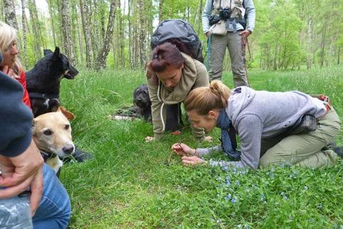 Naturspaziergang mit Hunden und Fährtenleserin
