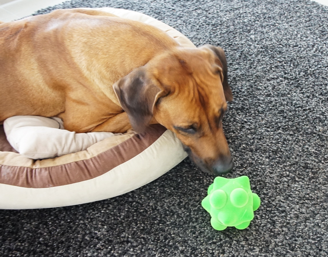 Persönlich getestet - die PfötchenBox für Hunde