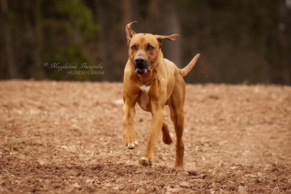 Bewegung von Hunden einfangen - Tipps für scharfe Fotos!