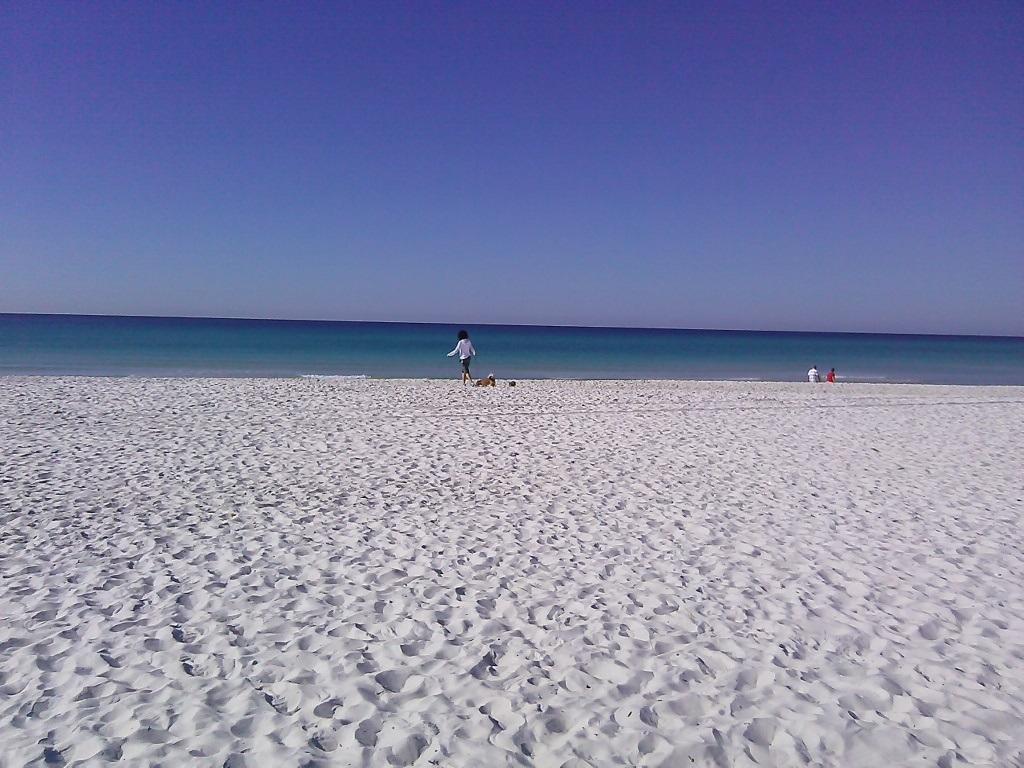"""Der """"hundefreundlichste Strand Floridas"""""""