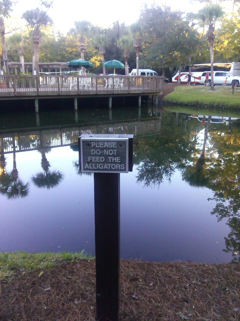 Wohnt hier tatsächlich ein Alligator?