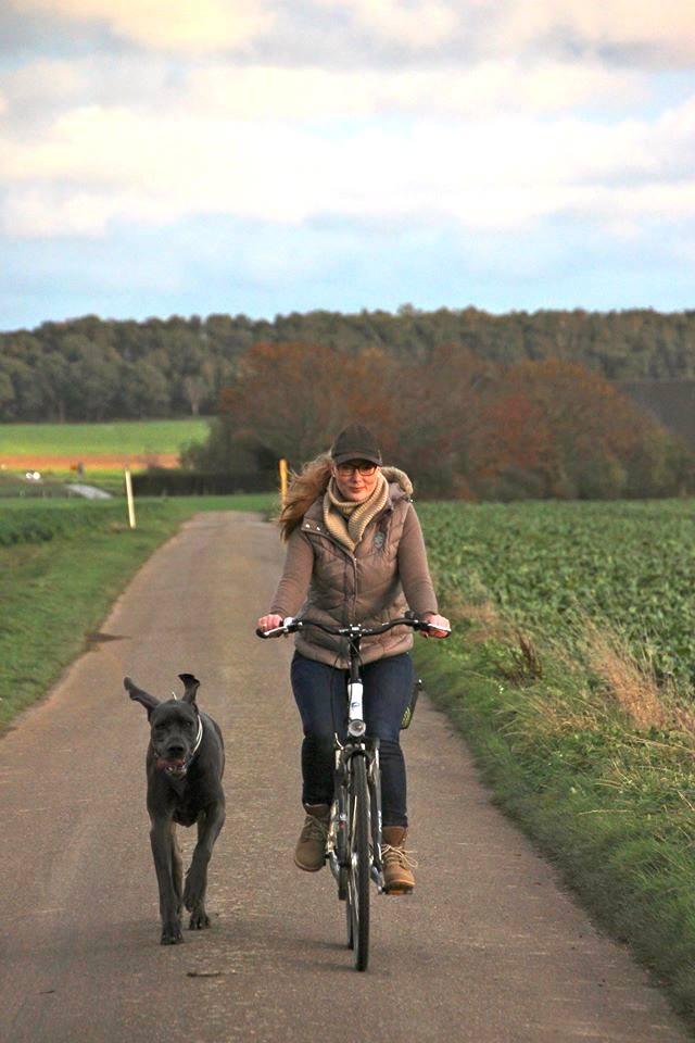 Aber es geht auch anders: Dogge Floris hat Spaß am Fahrradfahren Copyright Foto: Daniel Krämer