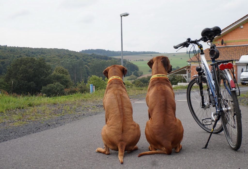 6 Tipps, worauf ihr beim Kauf eines Hundefahrradanhängers achten solltet