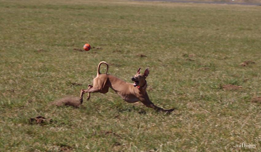 Hundeblog miDoggy - Hunde in Bewegung fotografieren 3