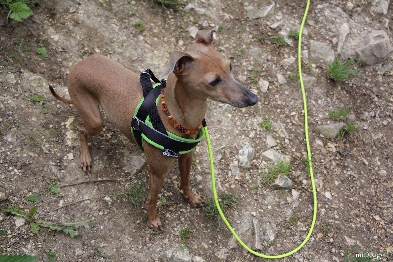 Hundeblog miDoggy Wandern
