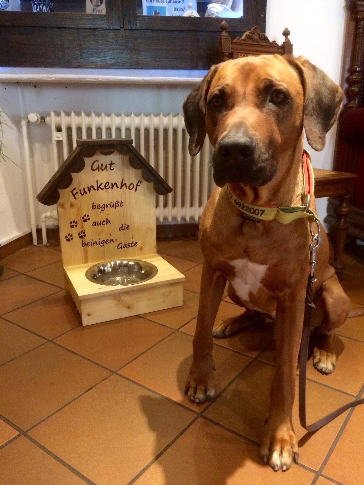 Hundefreundlichkeit Gut Funkenhof Altenhellefeld Sauerland