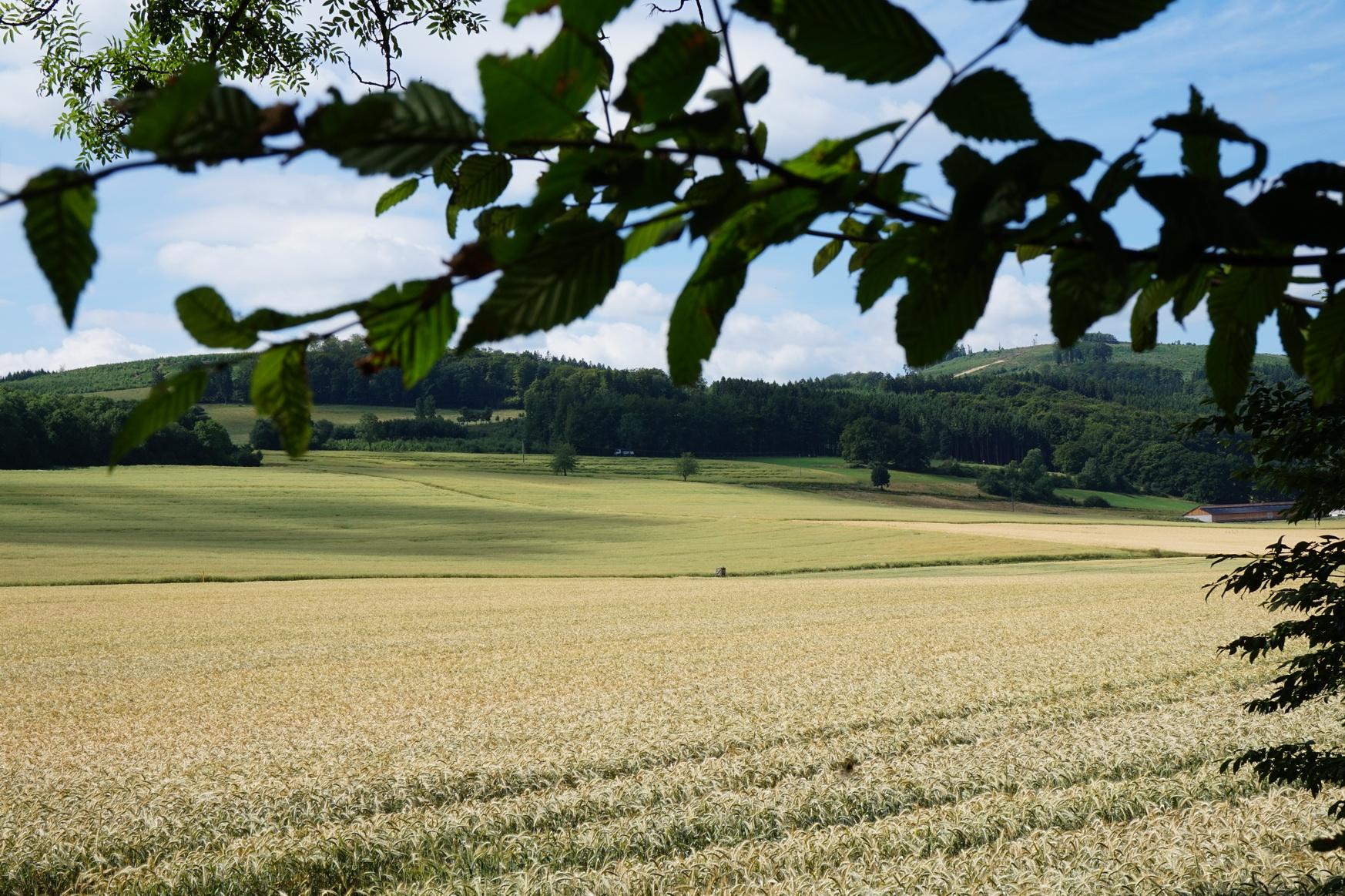 Wandergebiet Altes Testament Sauerland 7