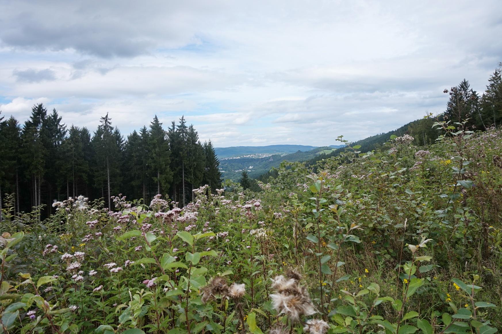 Burg Schnellenberg Attendorn Wandern 21