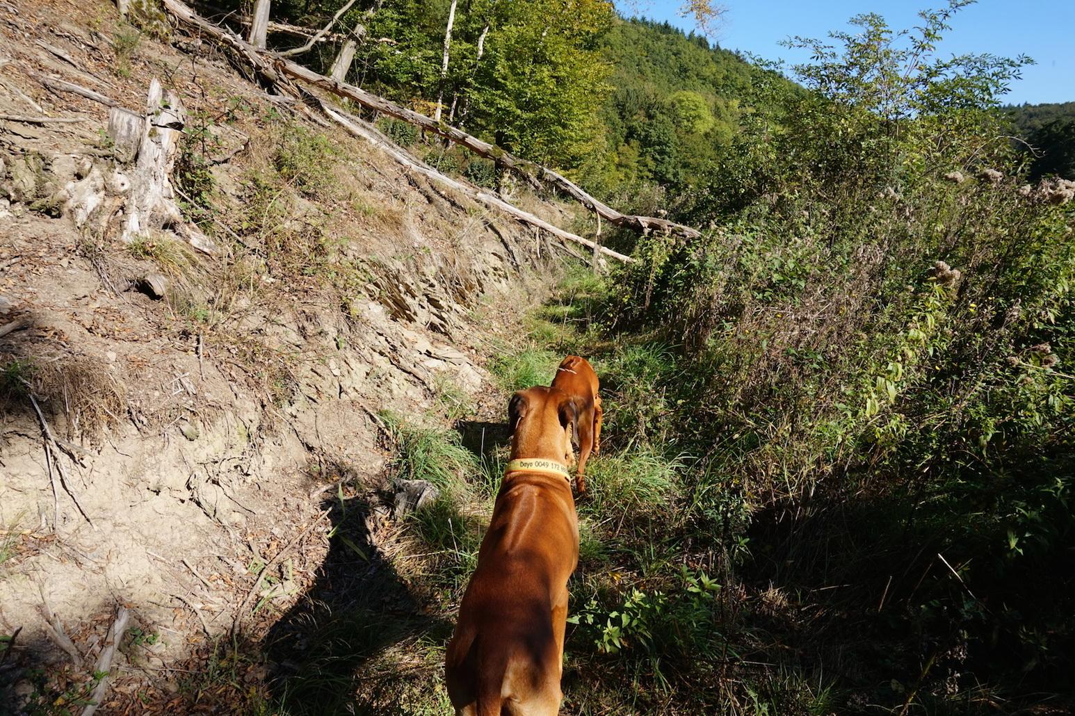 Als wir auf dem Wanderweg nicht weiterkommen, drehen wir um und gehen zurück nach Niedererbach