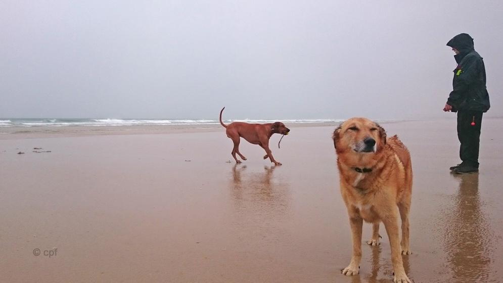 Spaziergang bei Regen und Wind macht nicht wirklich Spaß