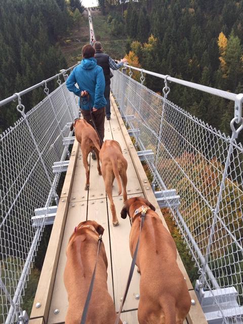 Mit Hunden über die längste Hängeseilbrücke Deutschlands