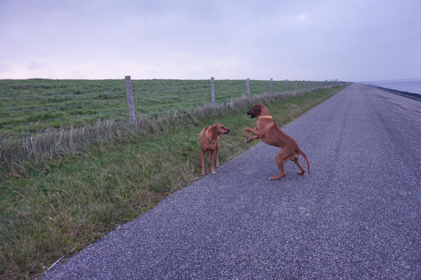 Texel - Deichspaziergang