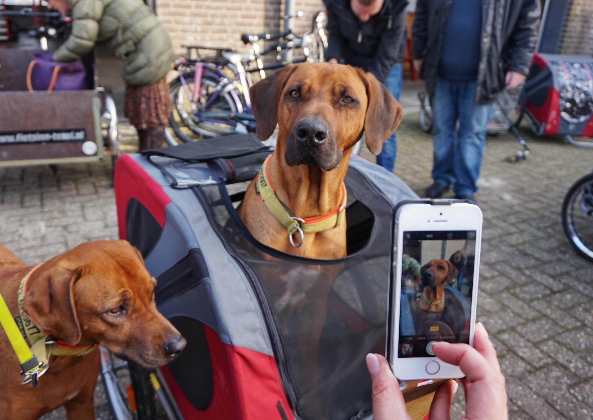Texel Fahrradfahren 7